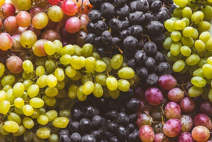 grüne und rote Trauben Früchte