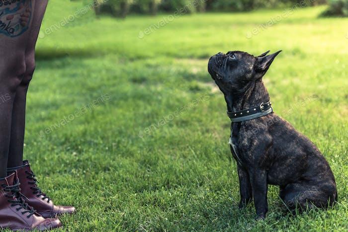 junge weibliche Lehre Französisch Bulldogge obiedence