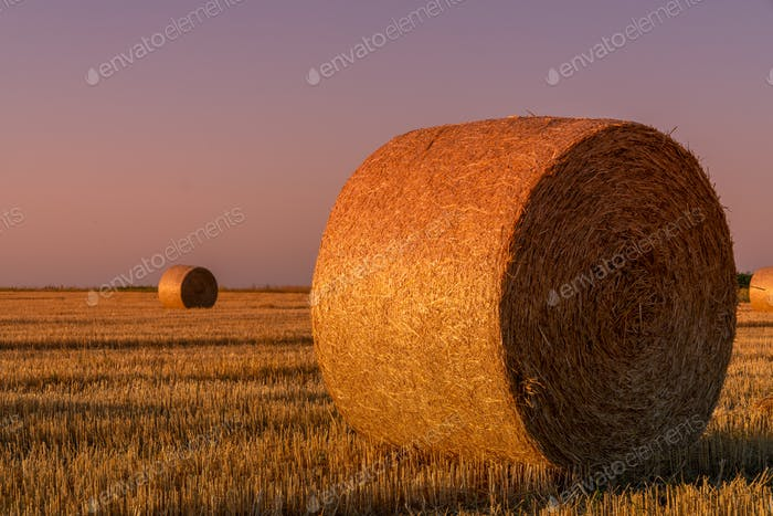 Hay rolls and warm sunset sunlight in the field