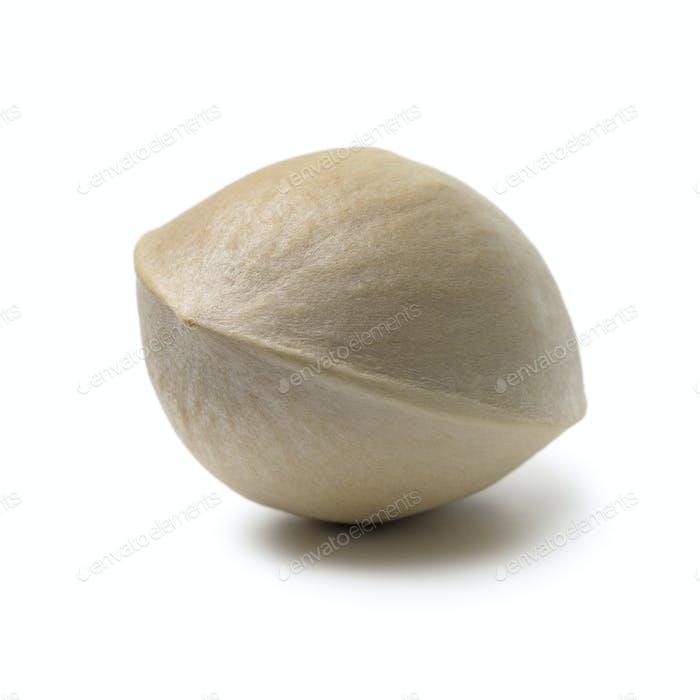 Single fresh raw ginkgo biloba nut
