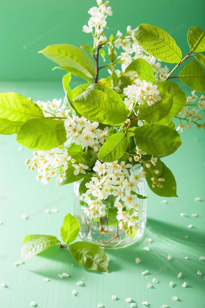 bird-cherry blossom in vase over green background