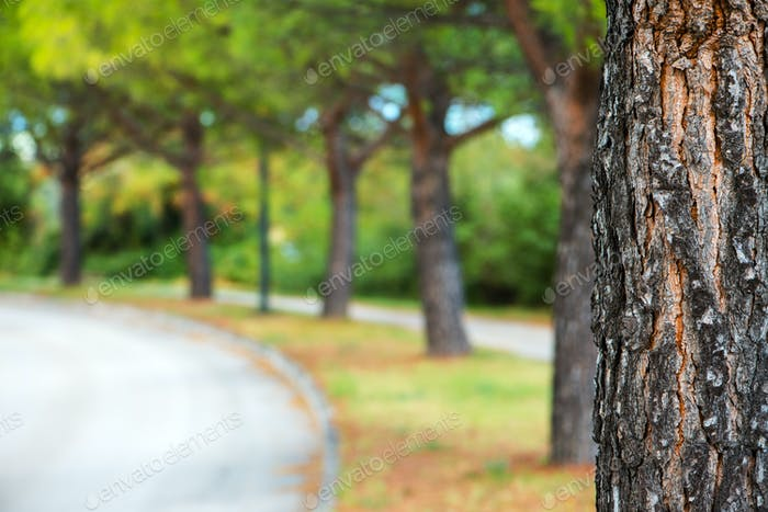 Park tree and defocused blur background