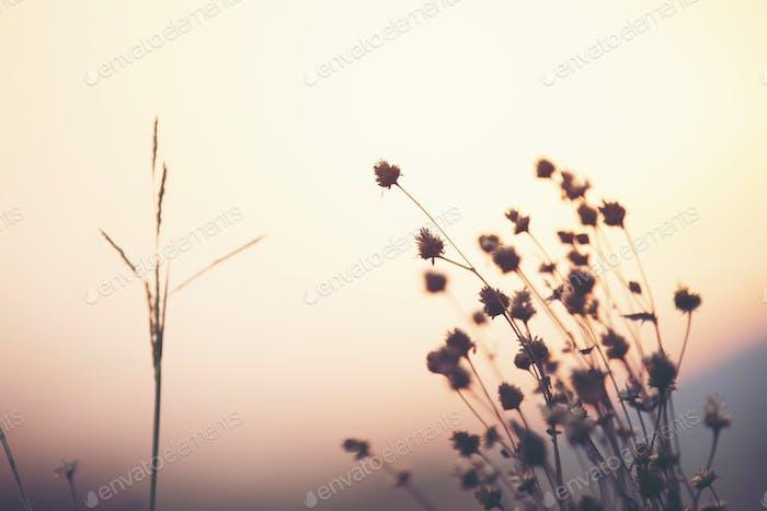 wild flower sunset, nature sunset with the flower grass