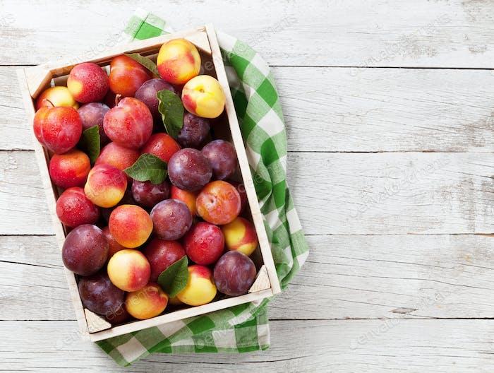 Frische Pfirsiche und Pflaumen