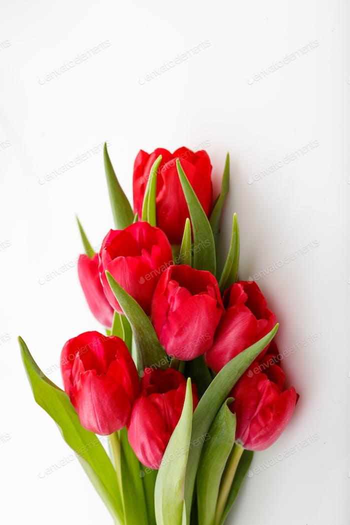 Rote Tulpen Bouquet isoliert auf weißem Hintergrund