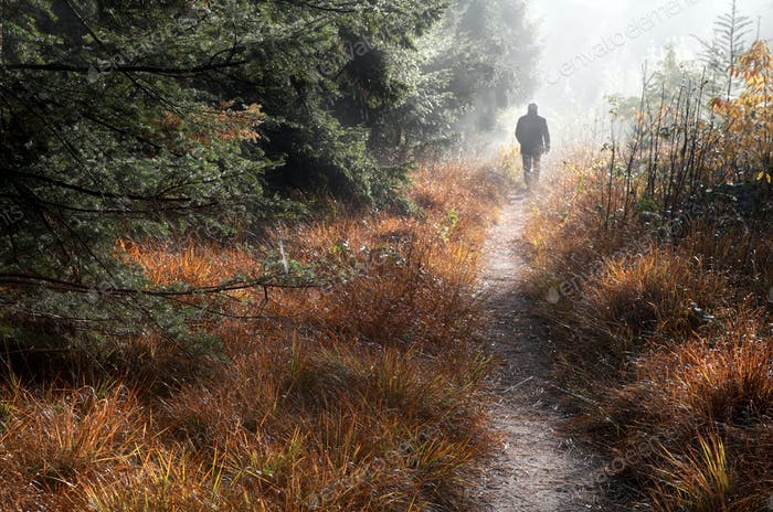 man walks on forest path in fog