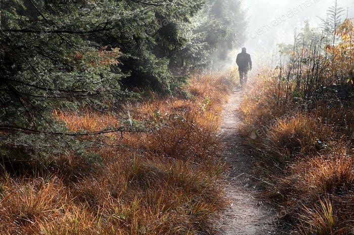 man walks on forest path in fog