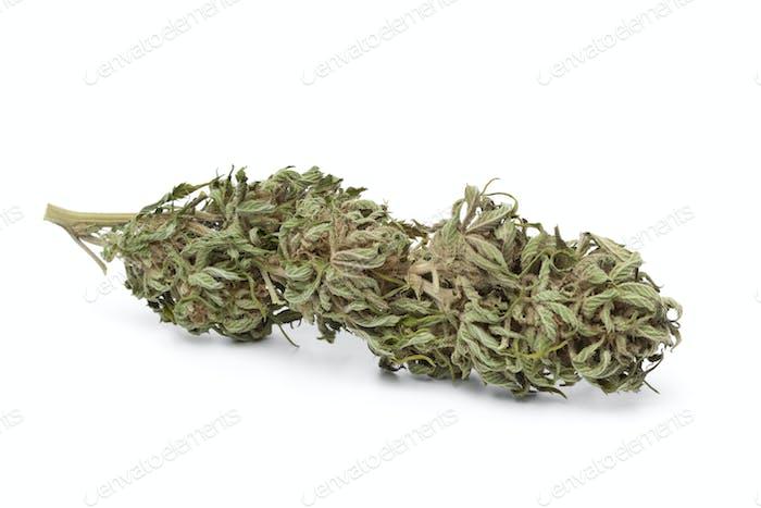 Getrocknete Marihuana-Knospe mit sichtbarem THC