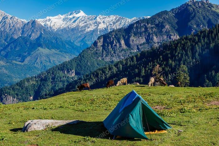 Camp in mountains. Kullu Valley, Himachal Pradesh, India