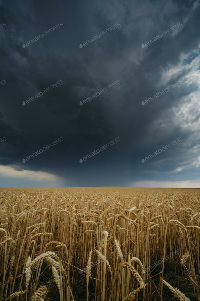 Summer Thunderstorm on Hay Field