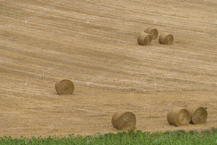 Hay Rolls on Field