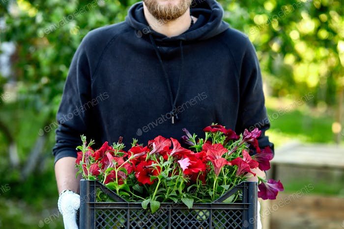 Man is shopping petunia flowers in garden center carrying basket.