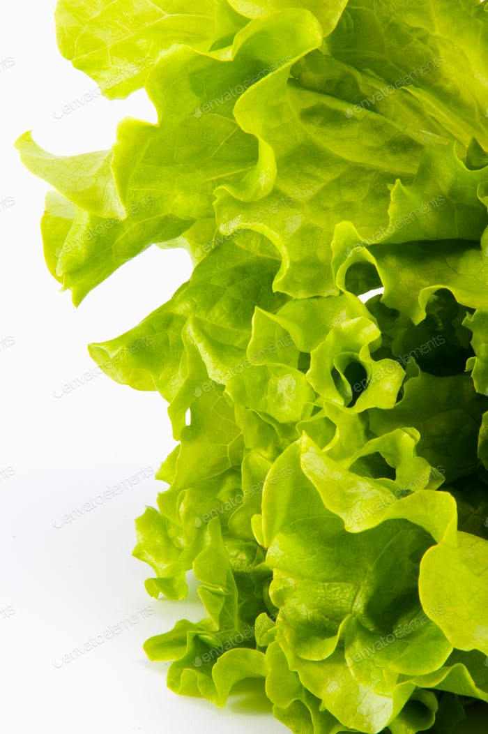 Fresh leaves of a young green salad close-up on a white backgrou