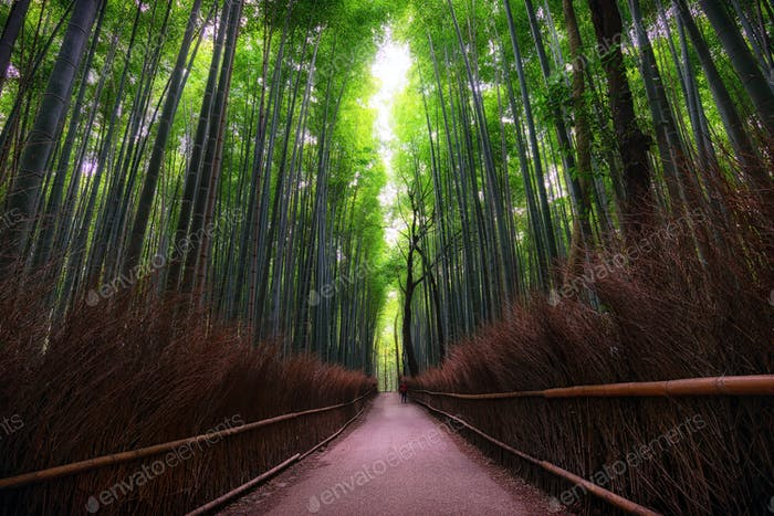 Arashiyama Bamboo grove near Kyoto, Japan