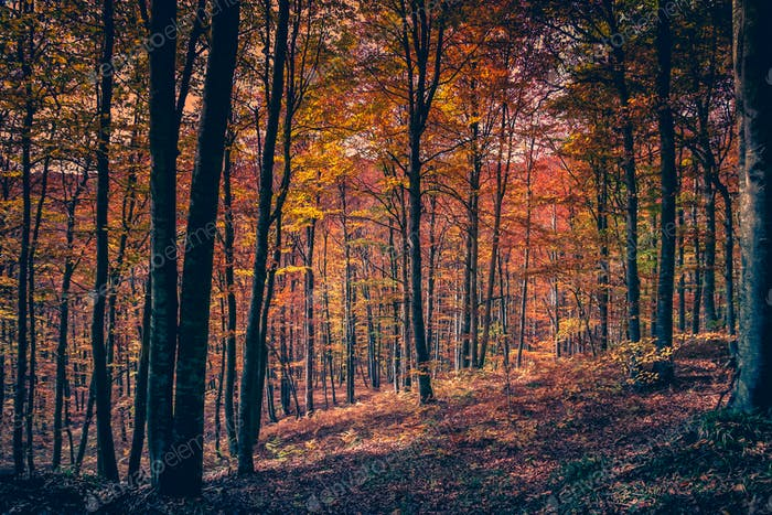 Schöner Herbstwald
