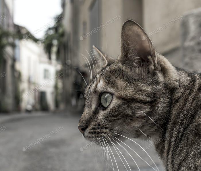 homeless cat down the street