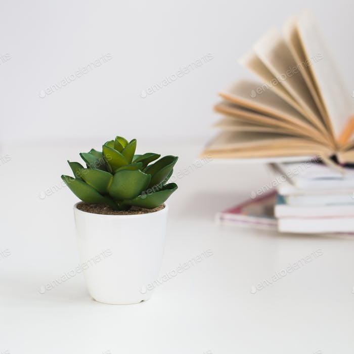 stack of books with artificial of plant on a white background