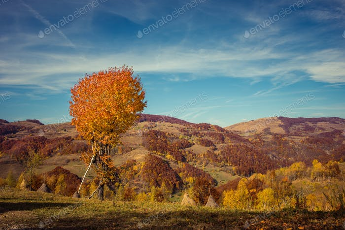 Colorful mountain landscape at autumn