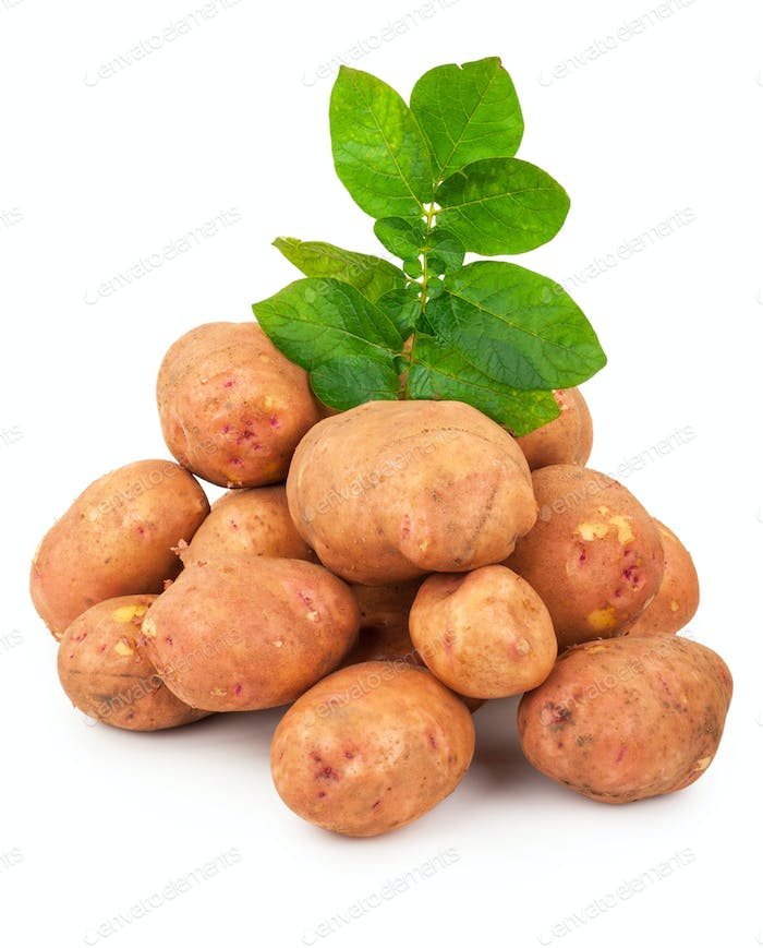 Red potatoes with leaves on a white