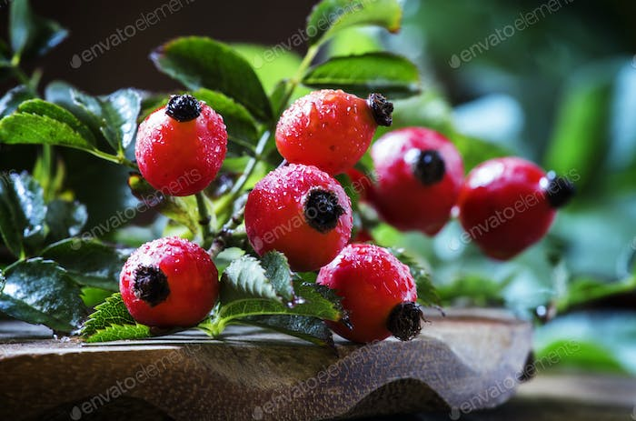Branches rosehip with berries on old wooden table