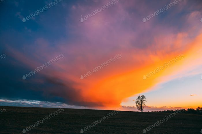 Time Lapse Time-lapse Timelapse Of Lonely Tree Growing In Spring