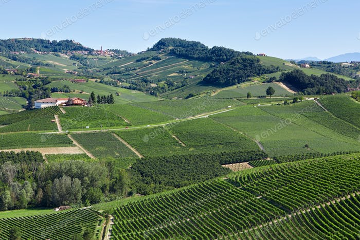 Green vineyards and hills in a sunny day in Italy