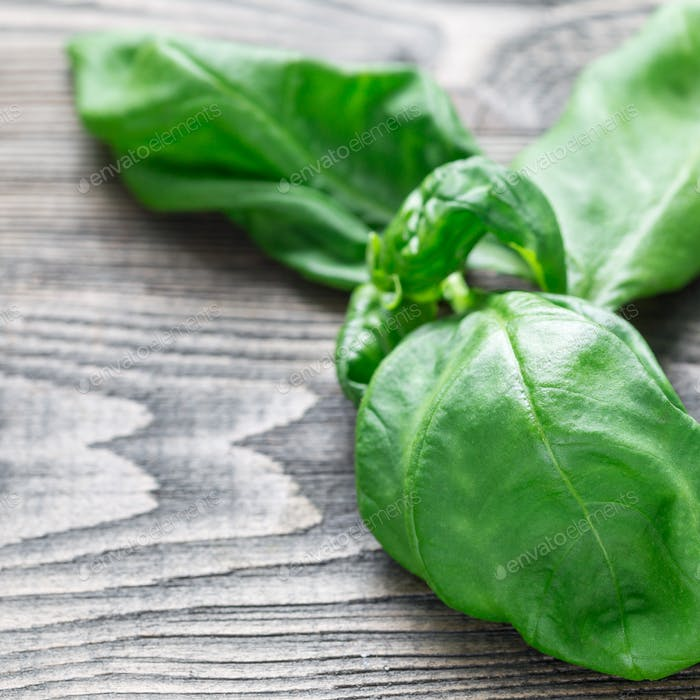 Fresh basil leaves on a gray wooden background, copy space, squa