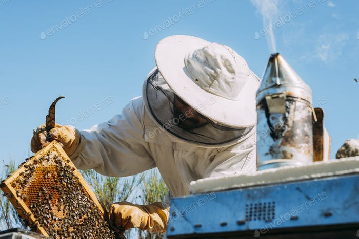 Beekeeper working collect honey.