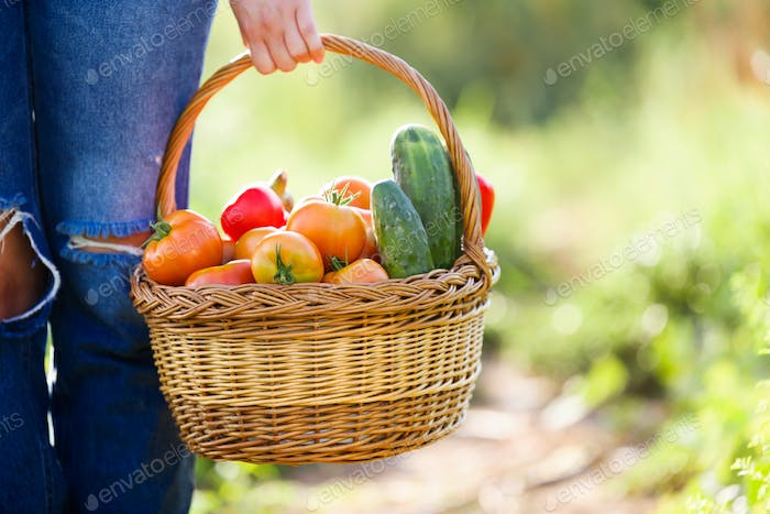 Young woman carrying basket with freshly harvested vegetables in