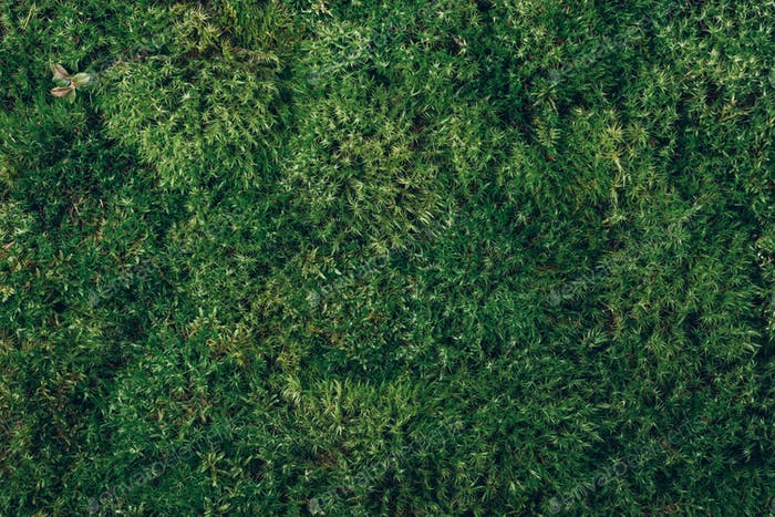 Natural green moss background. Top view. Copy space. Biophilic design. Organic, wild nature concept