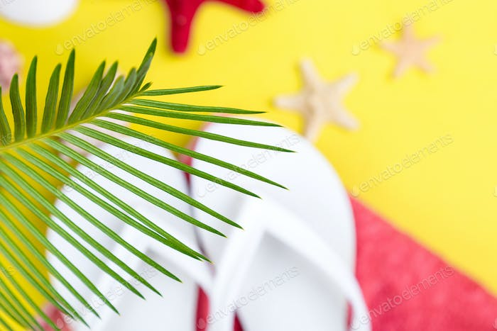 Tropical Background Palm Trees Branches with blurred