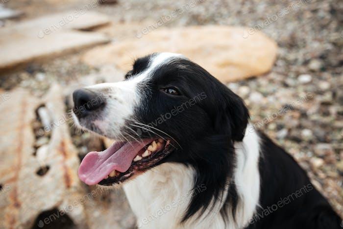 Dog sitting on the beach