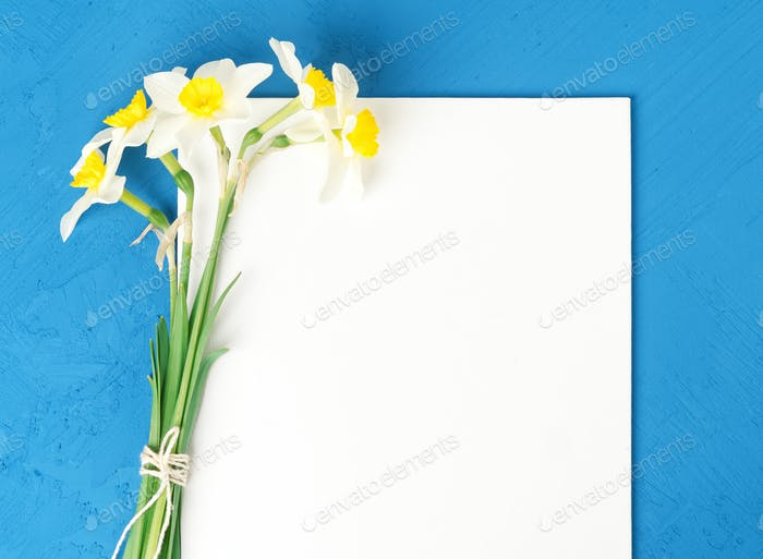 Bouquet of fresh flowers daffodils with blank white paper in blue textured concrete background