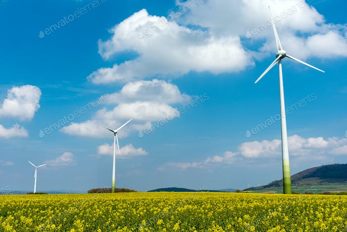 Wind engines in fields of rapeseed