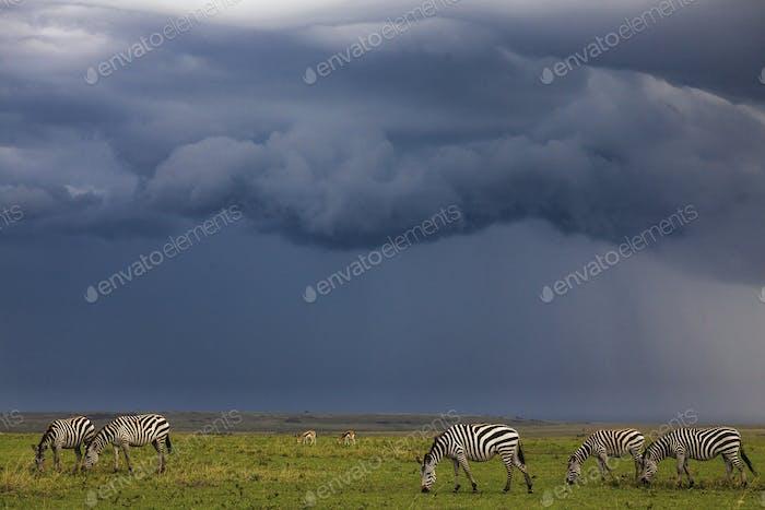 Ngorongoro-176