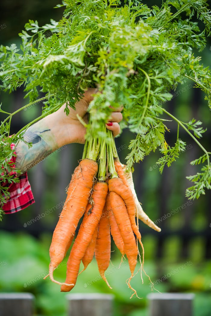 Tattooed millennials woman holding carrot in garden