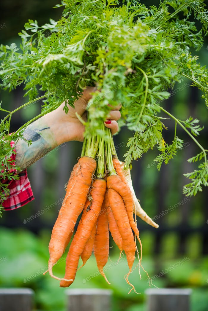 Thumbnail for Tattooed millennials woman holding carrot in garden