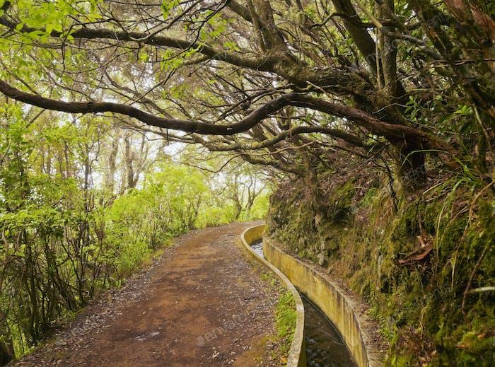 Levada on Madeira