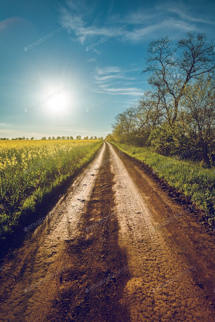 Sunshine and rural road in Bakota