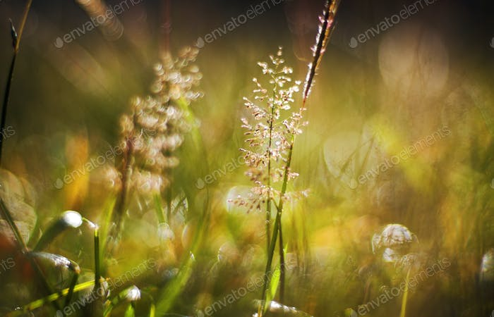 Close up view of nature in morning light moment