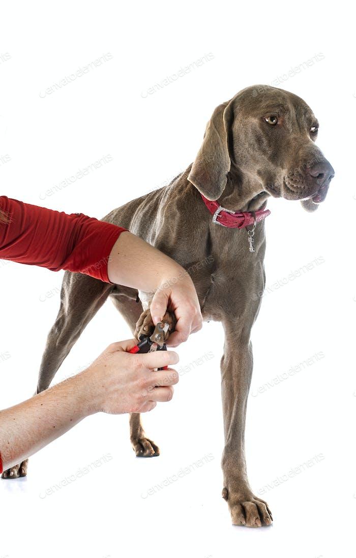 cutting the nail