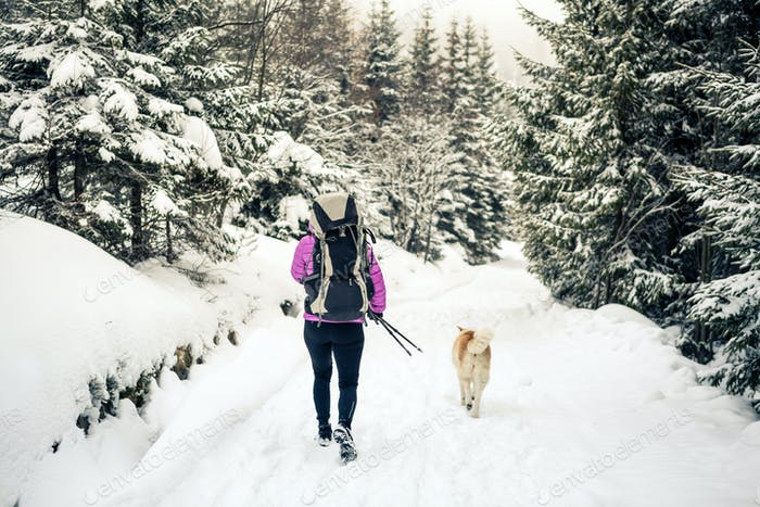 Woman walking in winter forest with dog