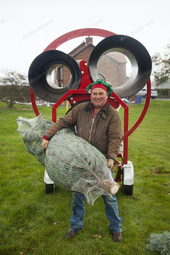 A man carrying a pine tree, on a Christmas Tree farm.