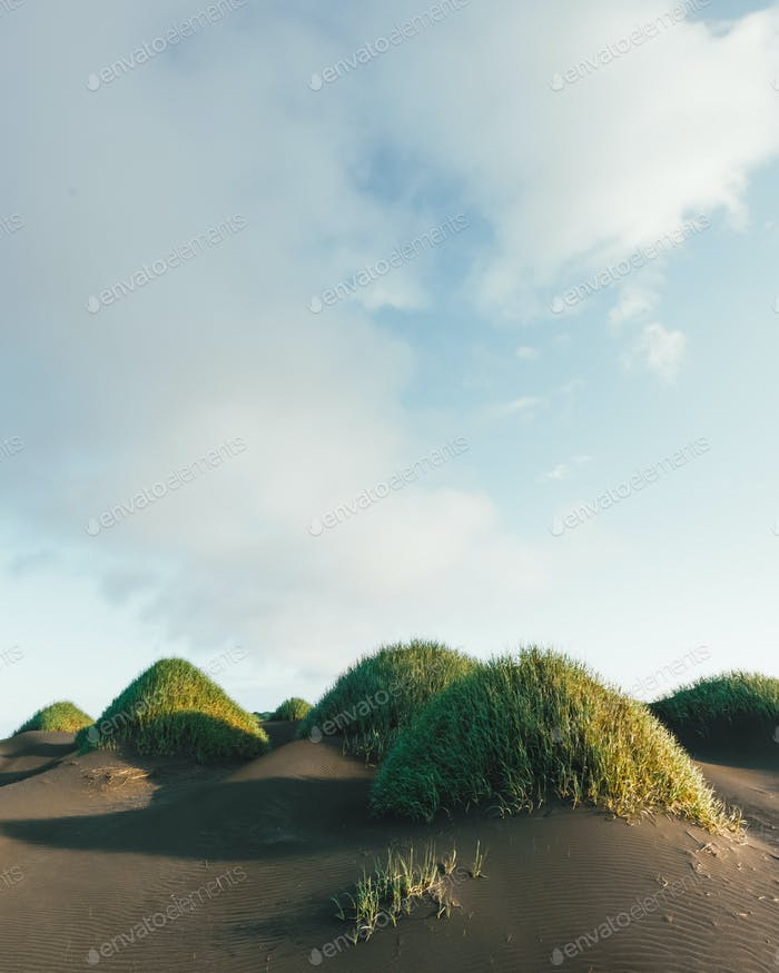 Berühmte Grashügel auf schwarzer Wüste in der Nähe von Stokksnes