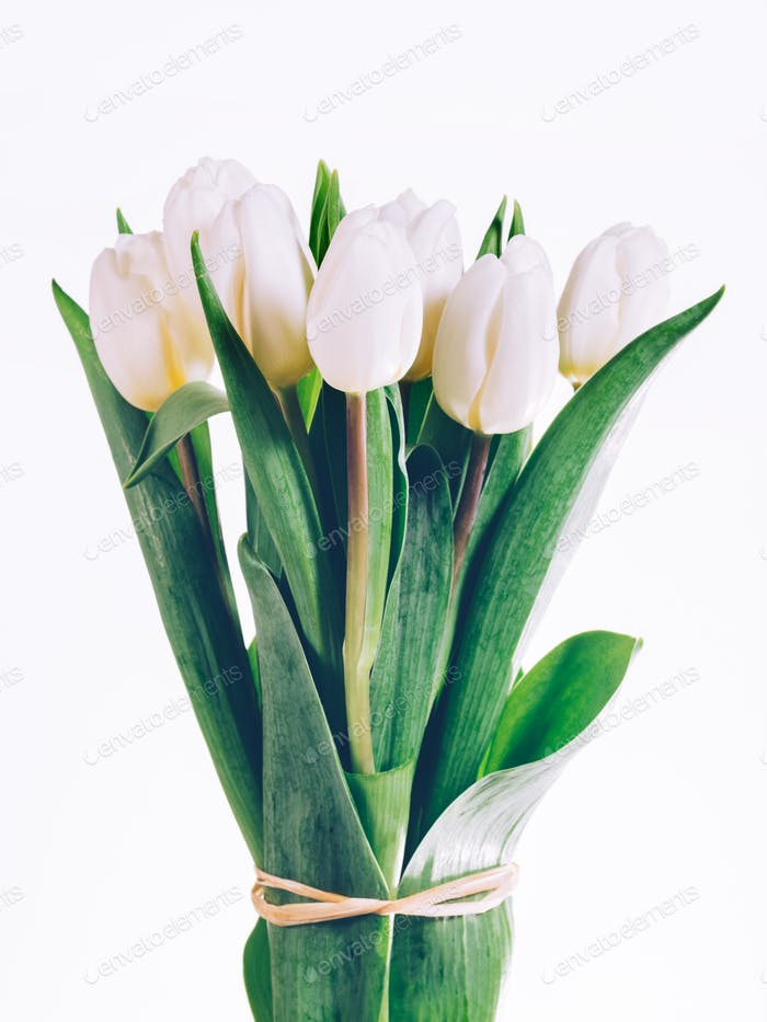 Bunch of fresh white tulips tied together.