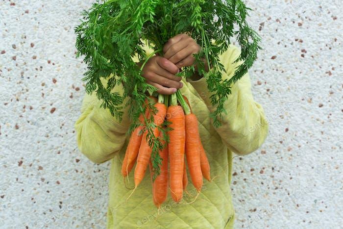 Junge, Kind Kind Hände mit homegrown Ernte von Karotten