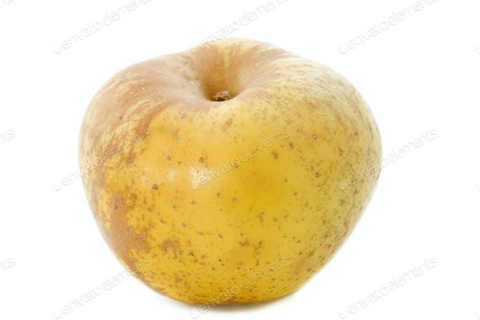 Golden russet apple