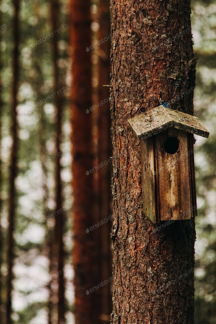 House for birds in the forest