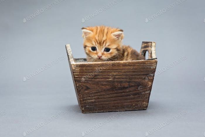 Little kitten  sits in a wooden box