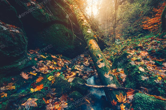 Schöner Herbstwald. Gebirgsfluss im Tal mit bunten Buche, Espe und Ahornblätter beleuchtet von